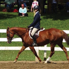 Local 4-H equestrians compete at state level